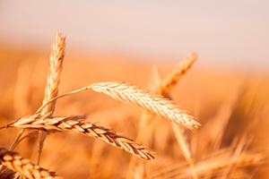 Украинский зерновой форум 2019